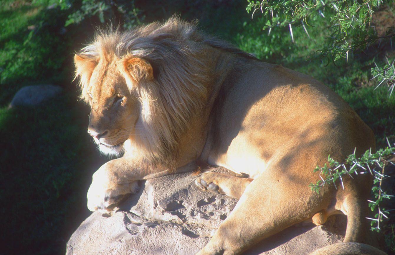 Le lion est mort ce soir centerblog for Dans jungle terrible jungle le lion est mort ce soir youtube